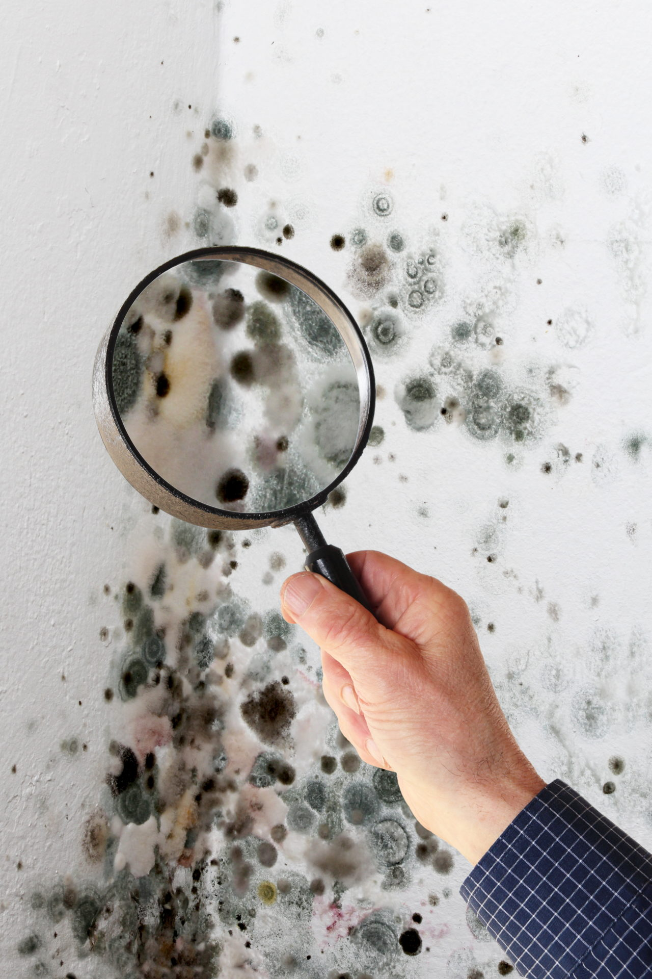 Mold Damage Claim Miami