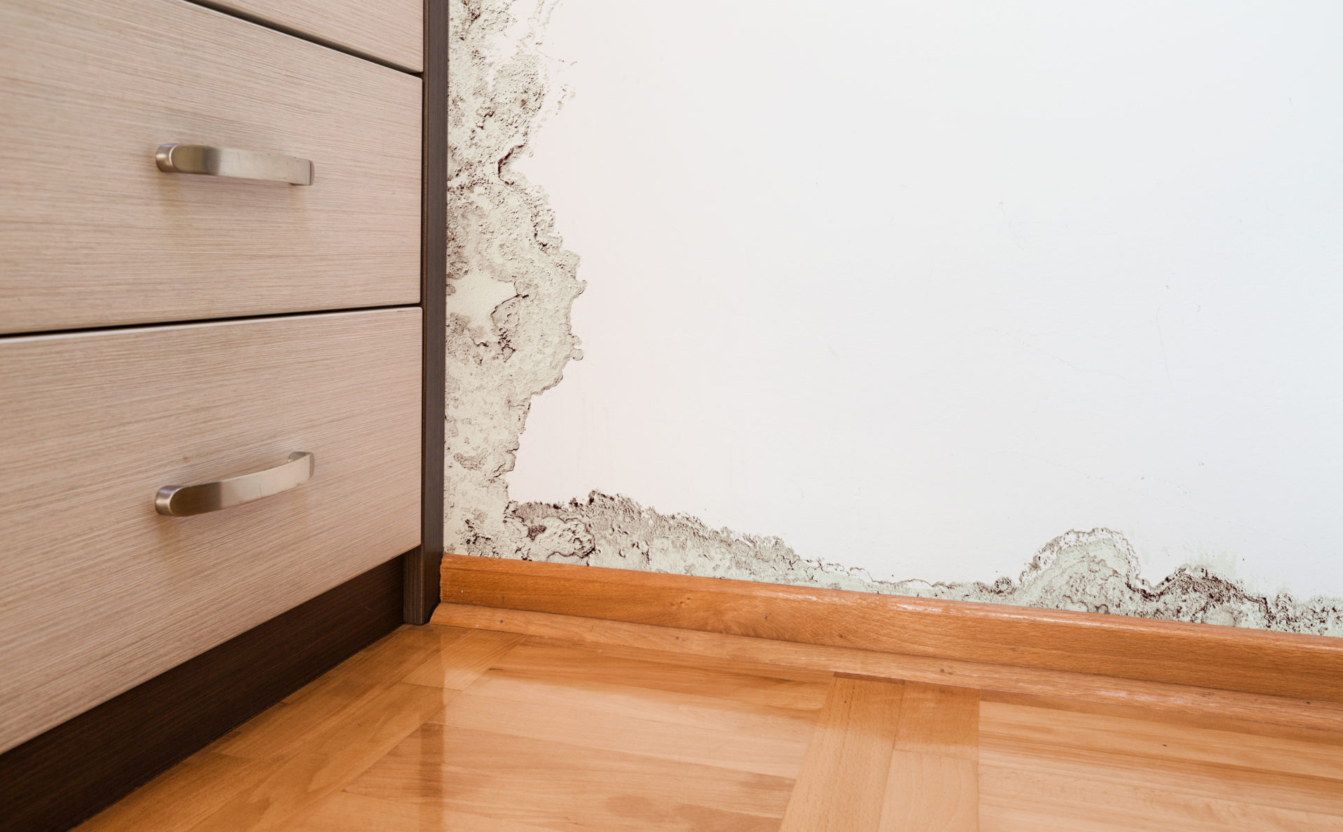 Mold Damage Florida Public Adjuster