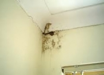 Mold Damage claims adjuster