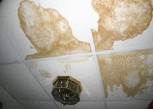 Mold Damage Claims Home Insurance
